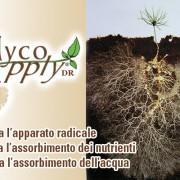 mycoapply-dr-copertina