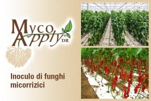 MYCOAPPLY -0,5 Kg, Funghi micorrizici