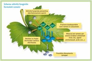 FUNGICIDA solfato tribasico di rame LT. 10